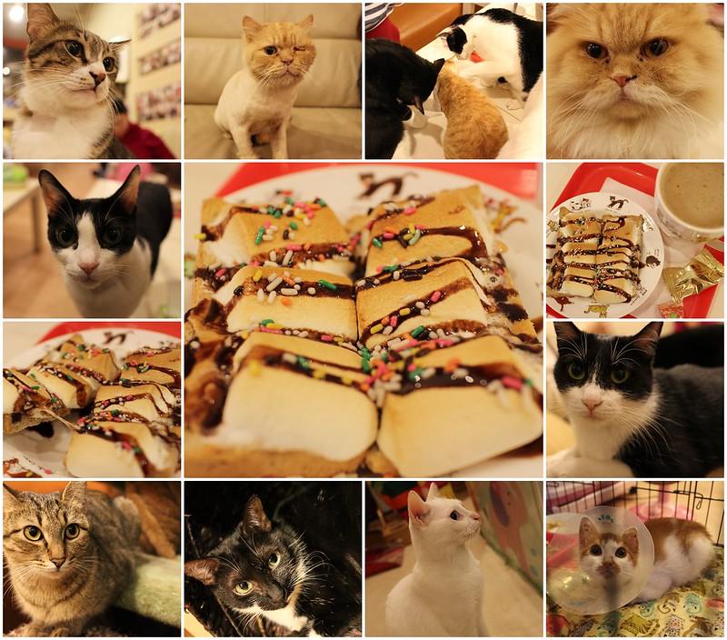 貓藝家Cat.Art.Home【新北市-捷運頂溪站】貓藝家,好多貓咪聚在一起的貓窩