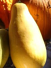 banana(0.0), pear(0.0), fruit(0.0), yellow(1.0), calabaza(1.0), produce(1.0), food(1.0), winter squash(1.0), cucurbita(1.0), gourd(1.0),