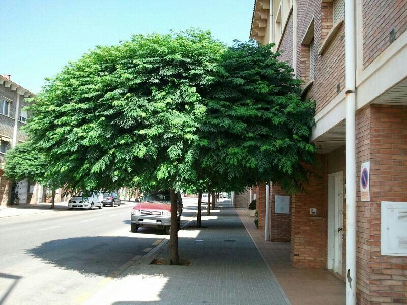 Arbol de copa ancha y crecimiento