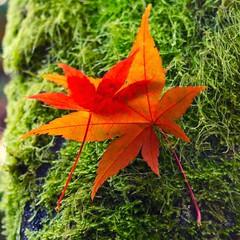 #Seattle #KubotaGarden #fallfoliage