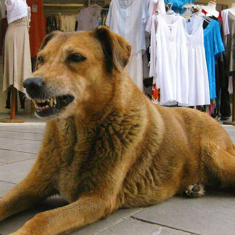 #Κέρκυρα 2012 #smiling dog