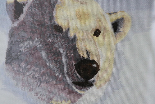 Polar Bear Framed Face Detail