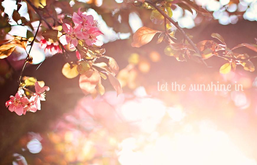 Deja entrar el sol
