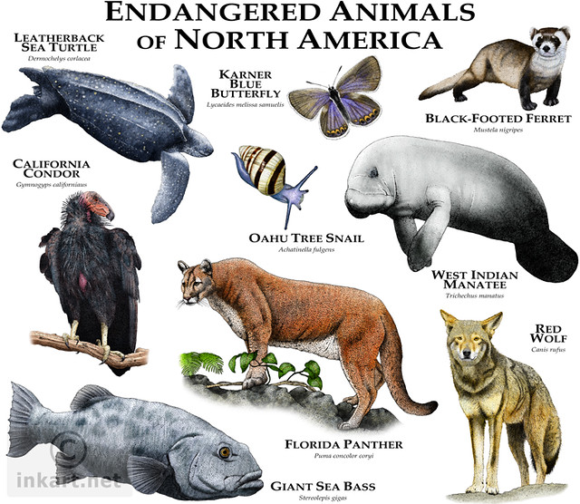 "help save the endangered species of south america Watch video the endangered species ""the endangered species act is the world an offshoot of the west indian manatee that roams the caribbean and south america."