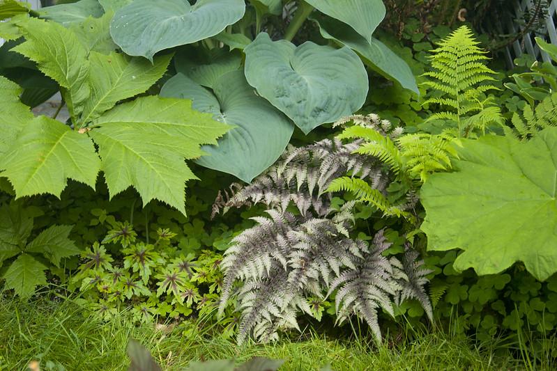 Shady Foliage
