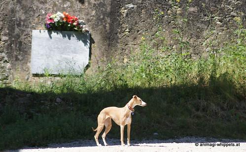 Gardasee 2013: La Rocca