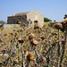 Kardamaina | 11. Antimachia Castle