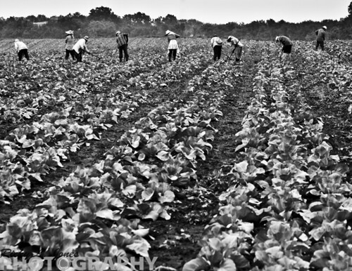Migrant Workers by Ricky L. Jones Photography