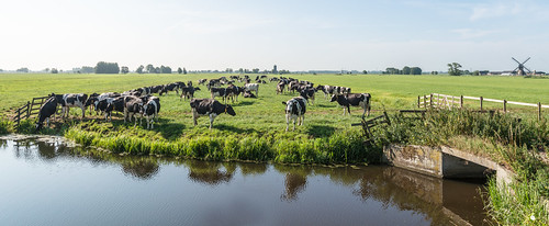Dutch polder landscape - Hollands polderlandschap by RuudMorijn