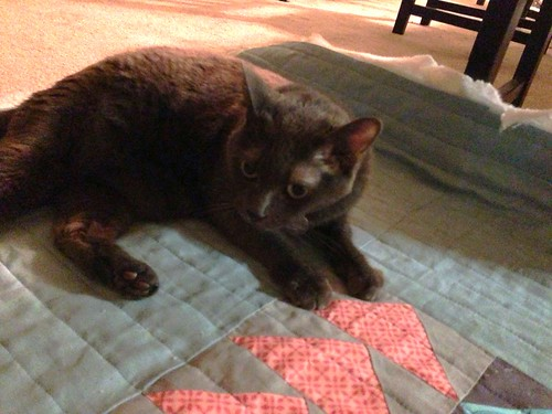 The quilt inspector approves