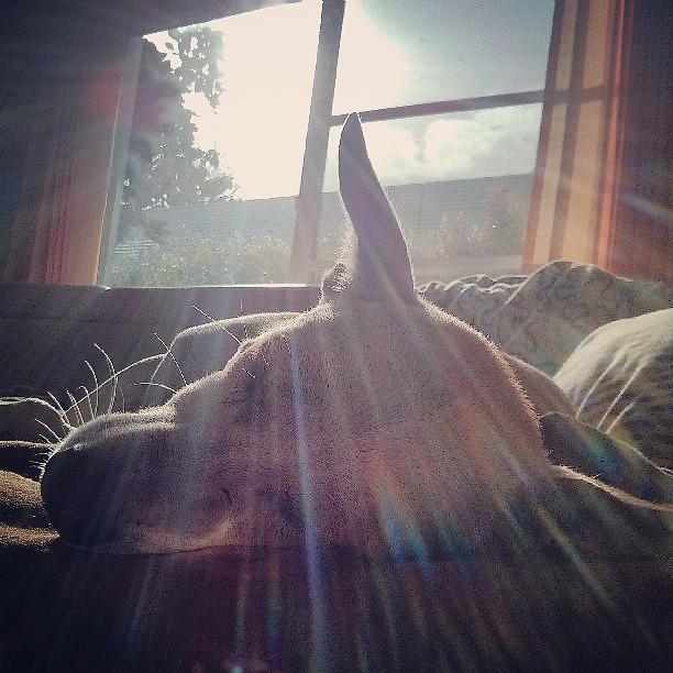 Yoda says good lazy morning. Its Friday, take it slowly ...