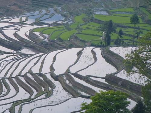 Yunnan13-Yuanyang 1-Duoyishu (13)