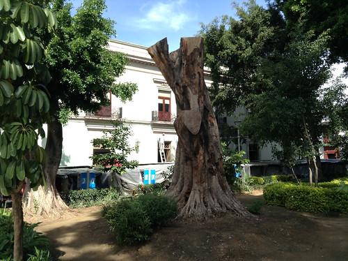 Alameda Park @ Oaxaca 10.2013