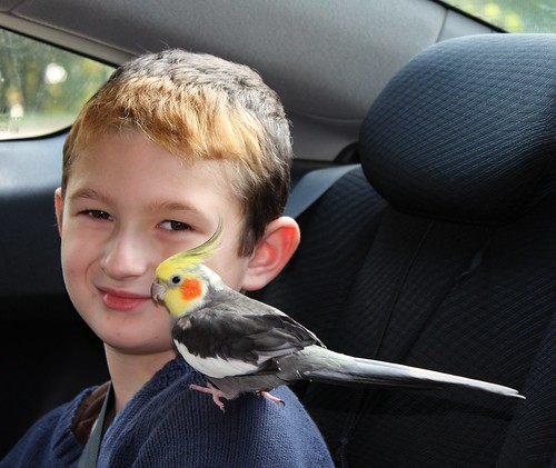 Little Boy and his bird!