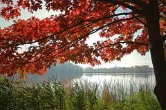 Der Herbst malt...