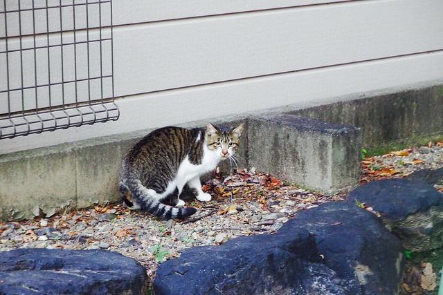 Today's Cat@2016-10-31