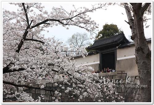 大阪城公園_櫻門VS櫻花