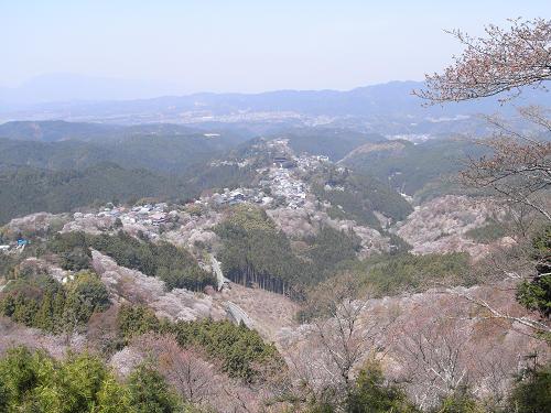 吉野の桜2011@吉野山-11