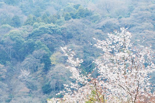 京都 天竜寺