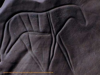 gravure rupestres cheval maroc
