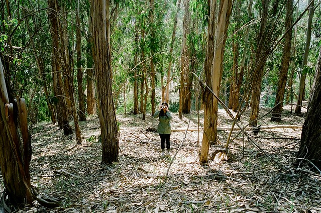 Lost Among the Eucalyptus Forest
