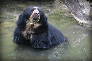 fauna-parque-nacional-huascaran-ancash-peru