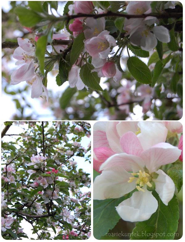 tuin_appelboom