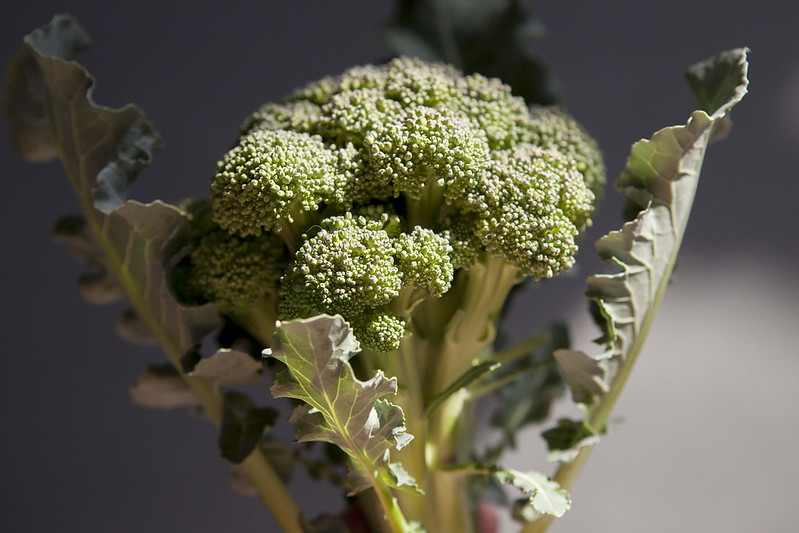 broccoli harvestIMG_2578