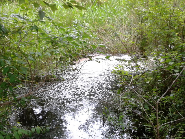 Foam downstream