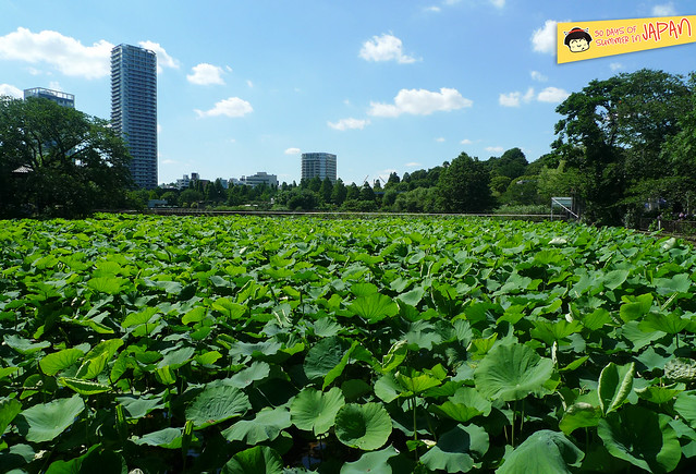 lily pond and the city - ueno park