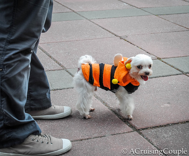 Cute Puppy in Bee Clothes