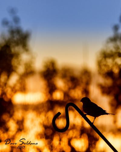 blue trees light sunset red orange bird closeup sony pole finch perch beautful slta55v