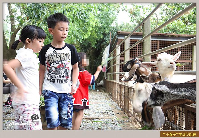 益健羊乳場14