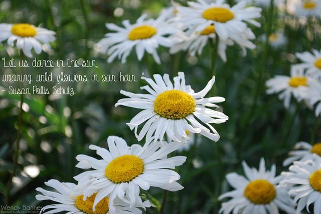 Summer Daisies Background