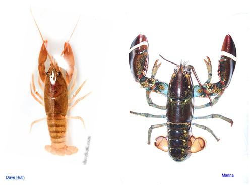 crustacean scale