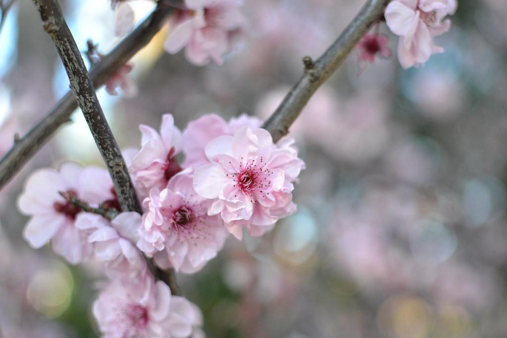 Sakura 2013.08.24