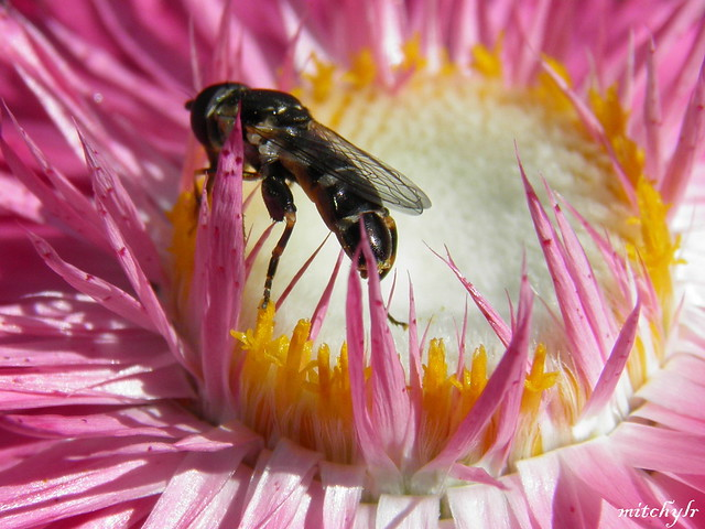 Fly On A Flower 1