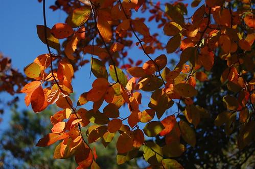 Driftless Area Fall Foliage hiking