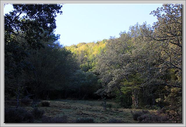 Roblón de Estalaya (Palencia) (8)