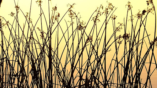 morning sun sunlight reflection reed sunrise reflections reeds dawn daylight memorial fuji florida melbourne wetlands fujifilm fl daybreak brevard viera xf grissom ritch xe2 xmount xf1855