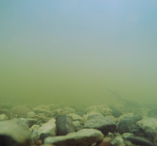 Had to test out the GoPro's underwater abilities... Alright for a murky, limited visibility bottom of the Saint Louis River | Gary-New Duluth, MN