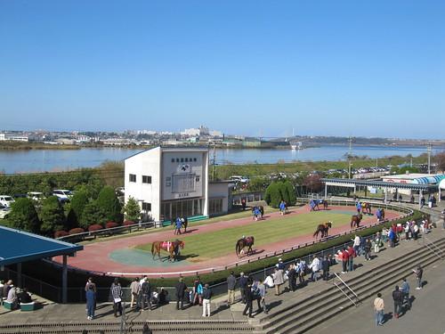 金沢競馬場の2階のバルコニーから見下ろしたパドック