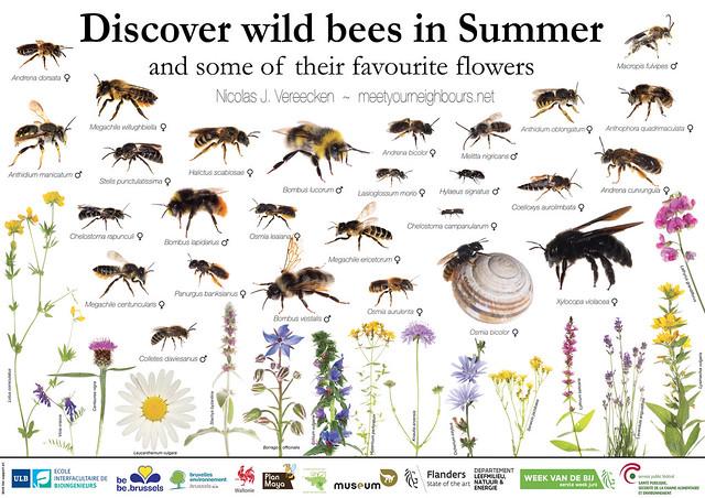 MYN poster on Summer Bees