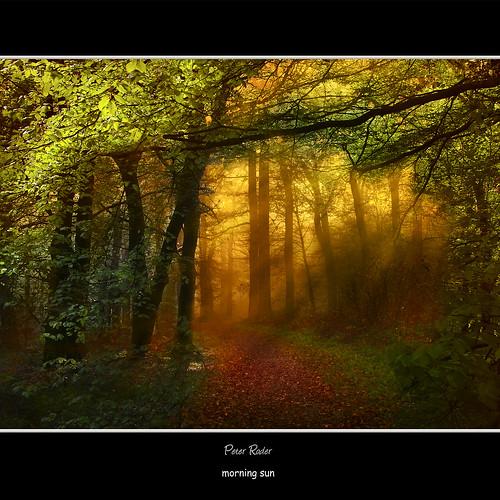 light sun mist tree nature leaves birds fairytale forest sunrise