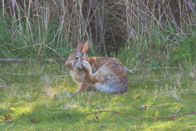 7059762211 1c367c1a18 z March Haiku / March Hare
