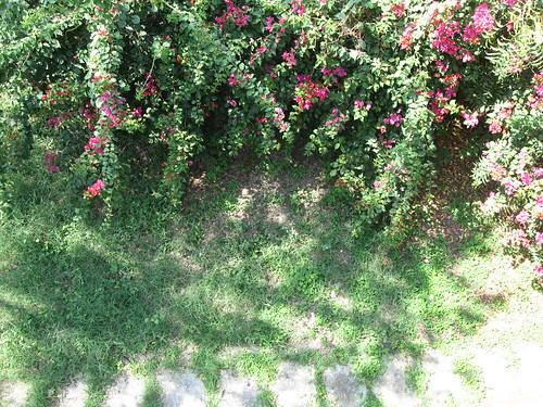 flowers plants home wall garden brickwall wildflowers frontporch topview bungalow treeshadow redflowers pinkflowers designwall greengarden naturalgarden gulmohurflowers daylightview gardentop
