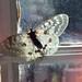 struggle pretty butterfly by roadkill rabbit