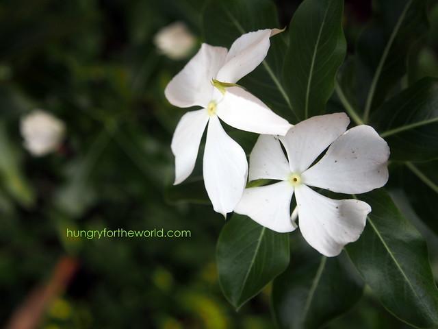 random white flower