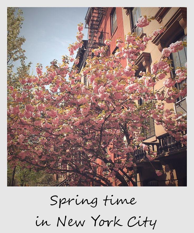 polaroid of the week new york city spring