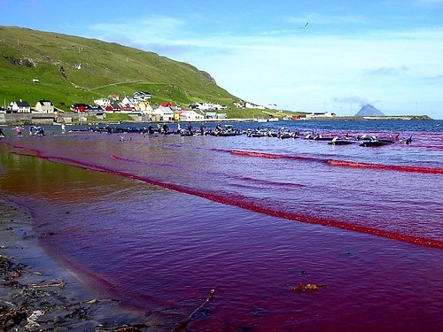 photo of a beach flooded with blood